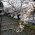 インクライン (蹴上鐵道遺跡) -- 櫻花 (13)