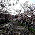 インクライン (蹴上鐵道遺跡) -- 櫻花 (14)