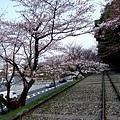 インクライン (蹴上鐵道遺跡) -- 櫻花 (15)