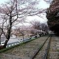インクライン (蹴上鐵道遺跡) -- 櫻花 (16)