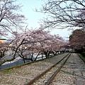 インクライン (蹴上鐵道遺跡) -- 櫻花 (17)