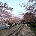 インクライン (蹴上鐵道遺跡) -- 櫻花 (18)