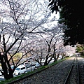 インクライン (蹴上鐵道遺跡) -- 櫻花 (19)