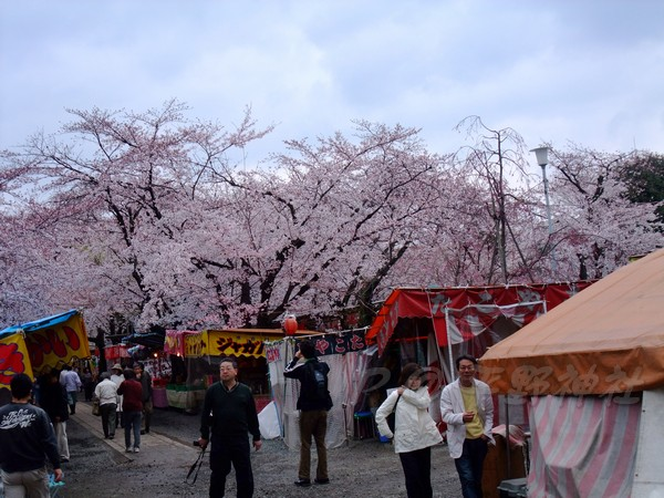 平野神社 -- 櫻花 (2)