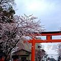 平野神社 -- 櫻花 (11)