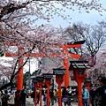平野神社 -- 櫻花 (15)