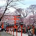 平野神社 -- 櫻花 (16)