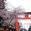 平野神社 -- 櫻花 (21)