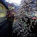 高瀨川 -- 櫻花 (1)