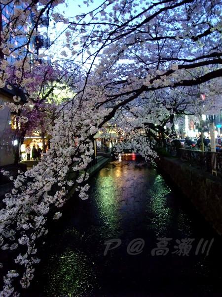 高瀨川 -- 櫻花 (4)