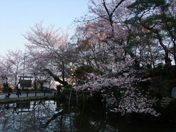 清水寺 -- 櫻花 (10)