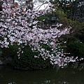 清水寺 -- 櫻花 (11)
