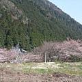 大原 -- 櫻花 (1)