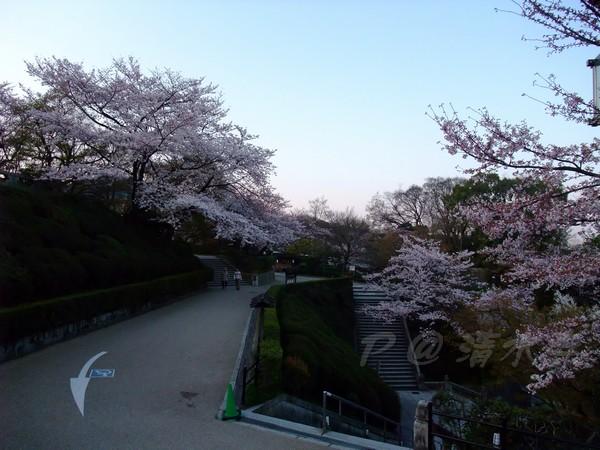 清水寺 -- 櫻花 (1)