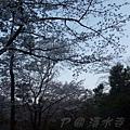 清水寺 -- 櫻花 (4)