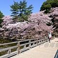 浮見堂 -- 櫻花 (10)