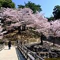浮見堂 -- 櫻花 (11)