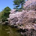 浮見堂 -- 櫻花 (12)