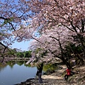 浮見堂 -- 櫻花 (13)