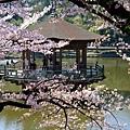 浮見堂 -- 櫻花 (15)