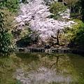 浮見堂 -- 櫻花 (1)