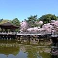 浮見堂 -- 櫻花 (3)
