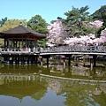 浮見堂 -- 櫻花 (4)