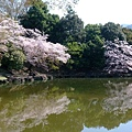 浮見堂 -- 櫻花 (5)