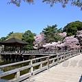 浮見堂 -- 櫻花 (6)
