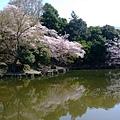 浮見堂 -- 櫻花 (7)