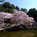 浮見堂 -- 櫻花 (8)
