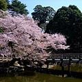 浮見堂 -- 櫻花 (9)