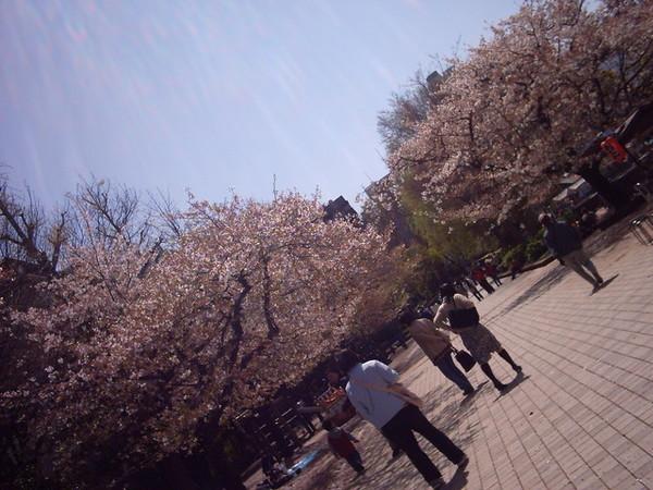 0405 上野