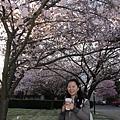 Cherry blossom rain?