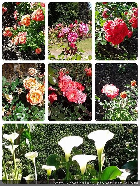 the world famous International Rose Test Garden