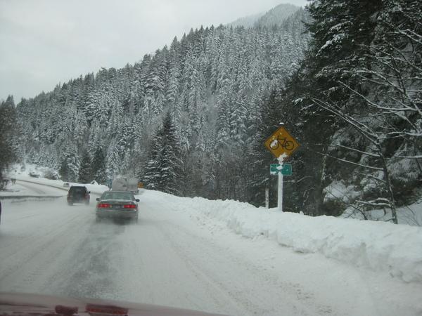 SNOW VIEW-8