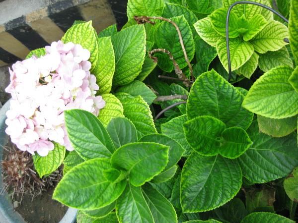 Flower in KHH.JPG