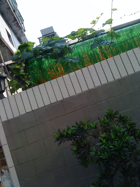 green on the wall.JPG