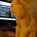 這樣我根本不能用鍵盤跟滑鼠了啦