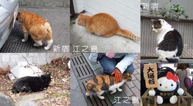 日本的貓.jpg