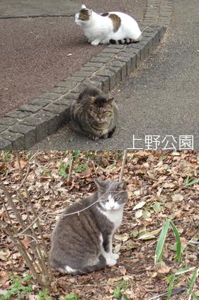 上野公園的貓.jpg