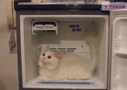 咩冰箱2.jpg