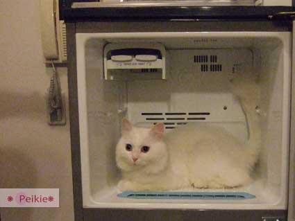 咩冰箱4.jpg