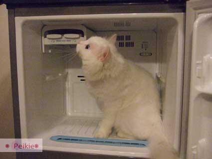 咩冰箱9.jpg