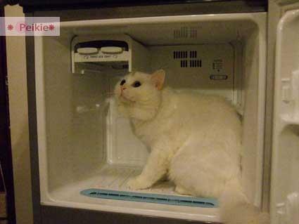 咩冰箱10.jpg