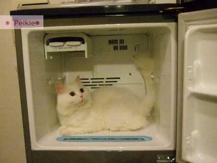 咩冰箱11.jpg