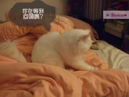 床上撒野的咩.JPG