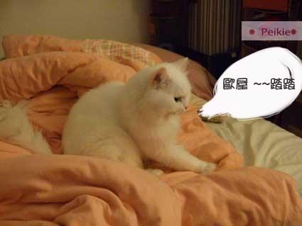 床上撒野的咩8.JPG