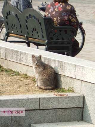 大阪城公園內的貓咪,有人拿飼料放在一旁給她吃