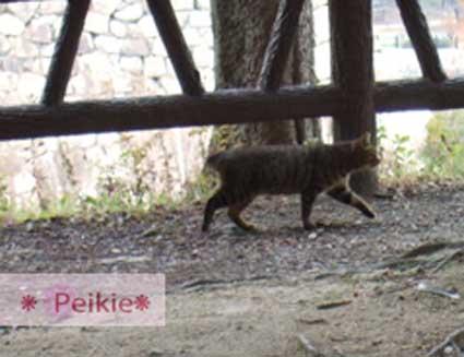 大阪城公園內的貓咪